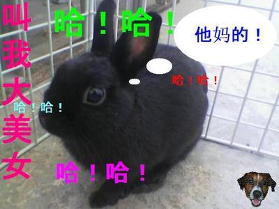 bunny_laid_04