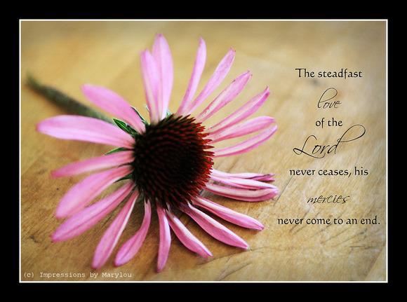 Steadfast Love.jpg